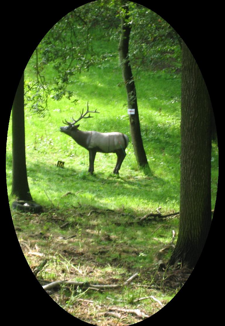 Bogenjagd im Steegenwald 15.06.2019